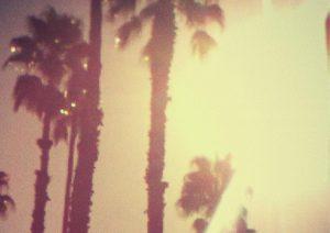 tsgp-palms